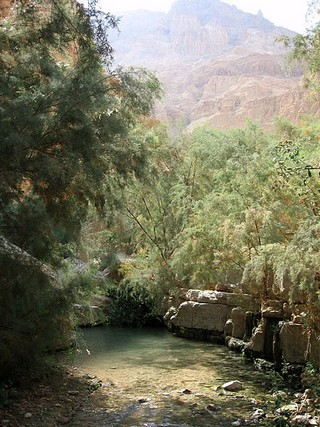 Arugot River in Gedi oasis